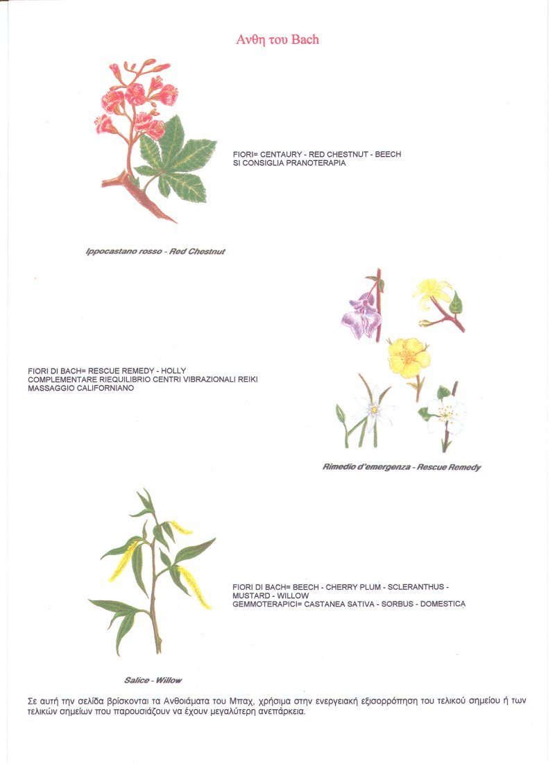 Bach herbs (2nd page)